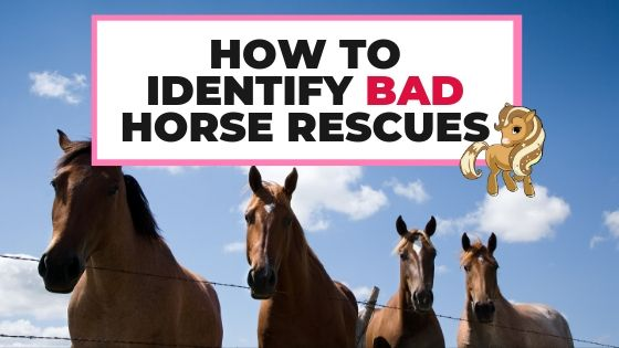 How To Identify Bad Horse Rescues