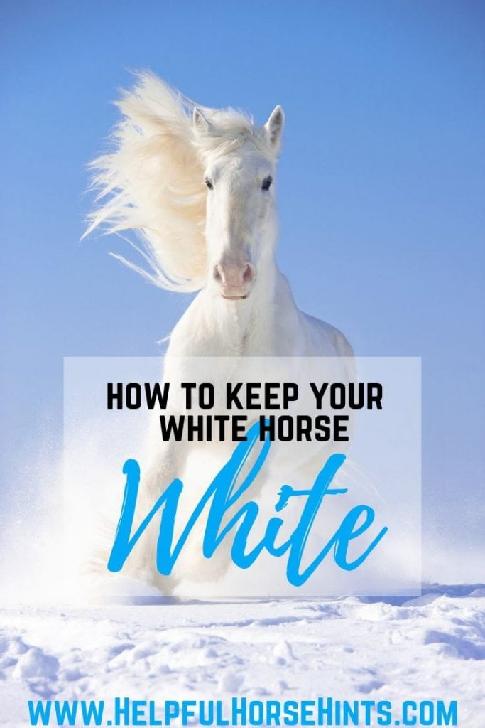 Pinterest pin - Ultimate Guide to Getting & Keeping Your Horse's Tail White