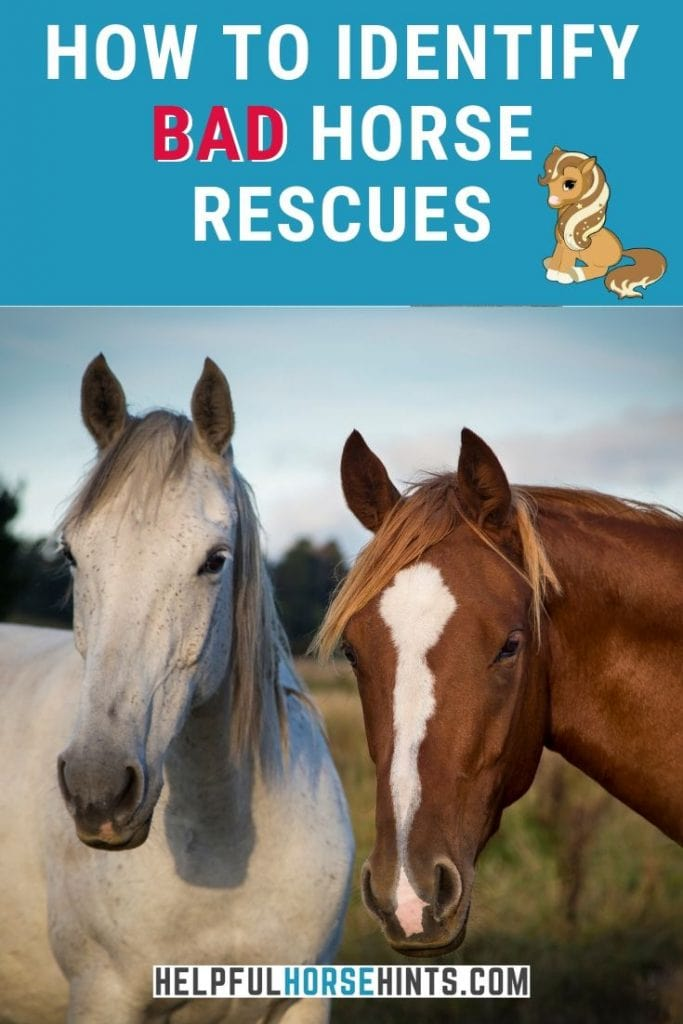 Pinterest pin - how to identify bad horse rescues.
