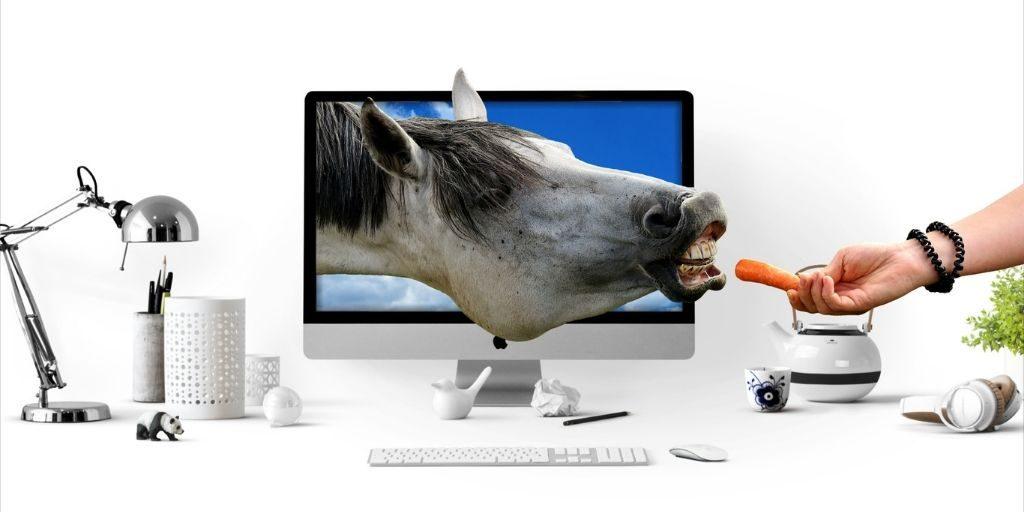 introducing horse treats