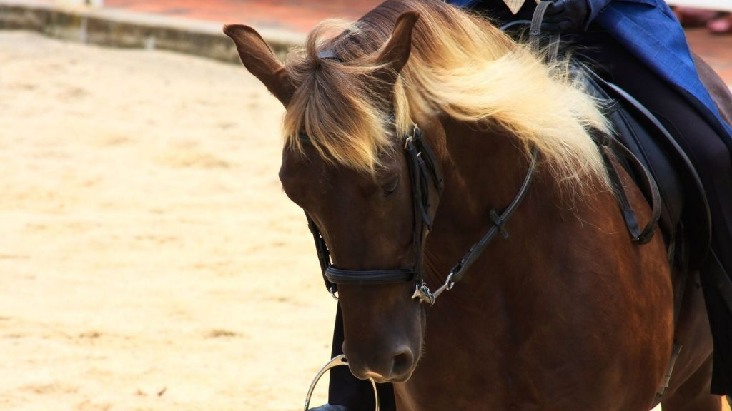 21 Palomino Horse Facts With Tons Of Pictures Helpful Horse Hints