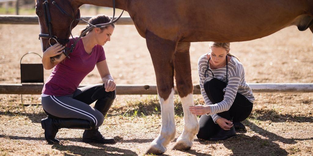 horse lameness exam