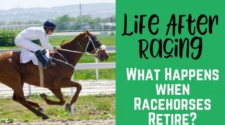Life After Racing – What Happens to Racehorses When They Retire?