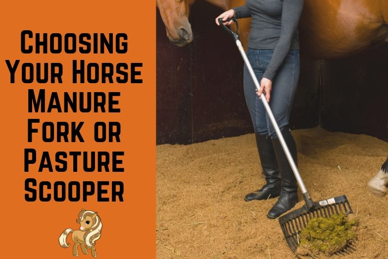 Guide to Choosing Your Horse Manure Fork or Pasture Scooper