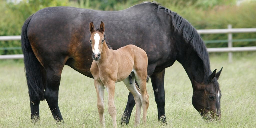 mare and foal in a pasture