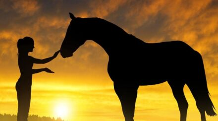 mixed breed horse and girl in sunset