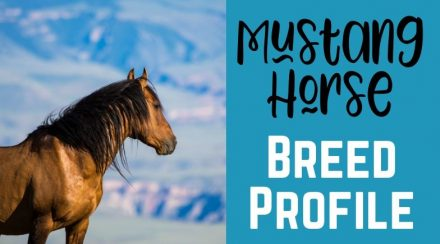 Mustang Horse Breed Profile