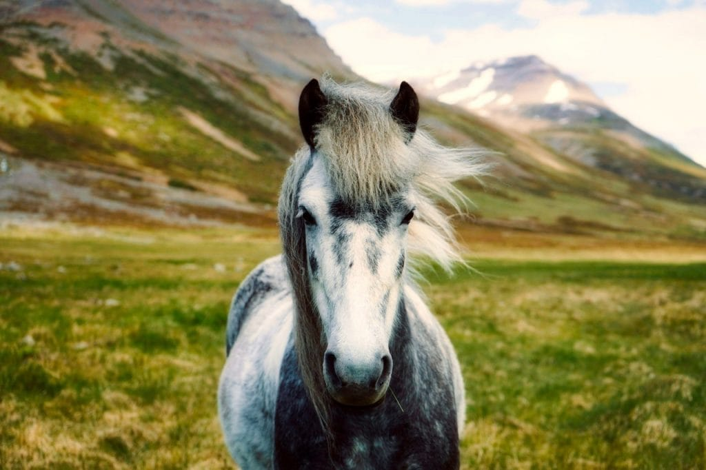 BLM Mustang horse in the mountains