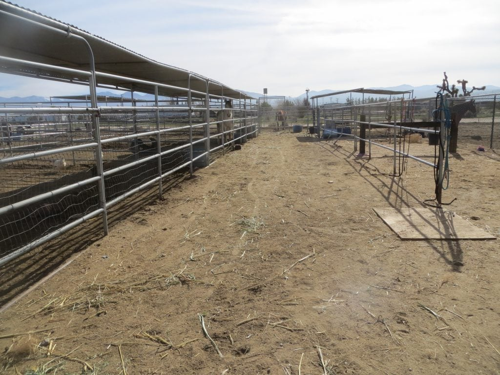 Mustang Horse Training Corrals - 6' Tall 24x24 Pens with a Makeshift Alley