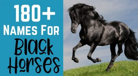 180+ Names for Black Horses