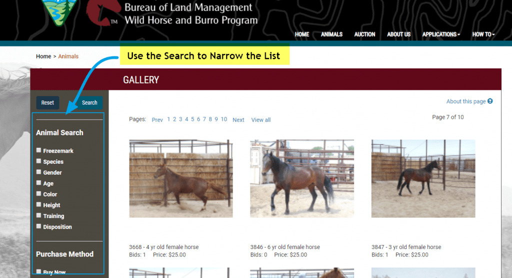 View BLM Horses available for adoption