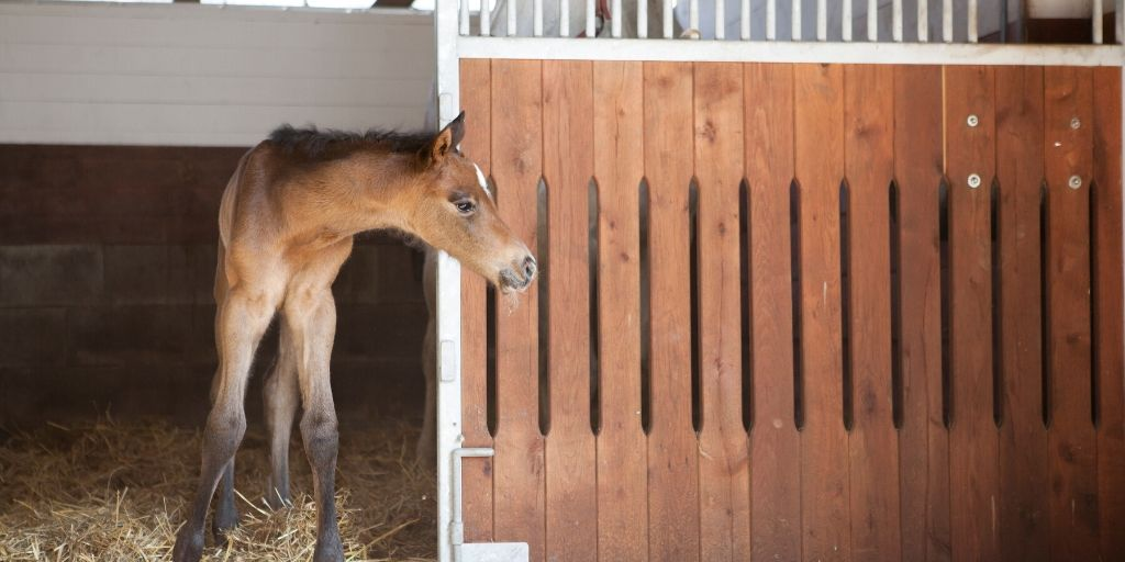 Nurse Mare Foals – Why Foals Are Taken From Their Moms