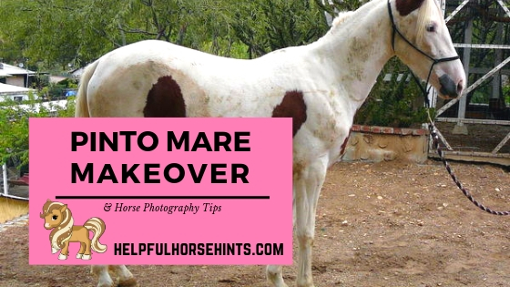 paint mare makeover and photography tips
