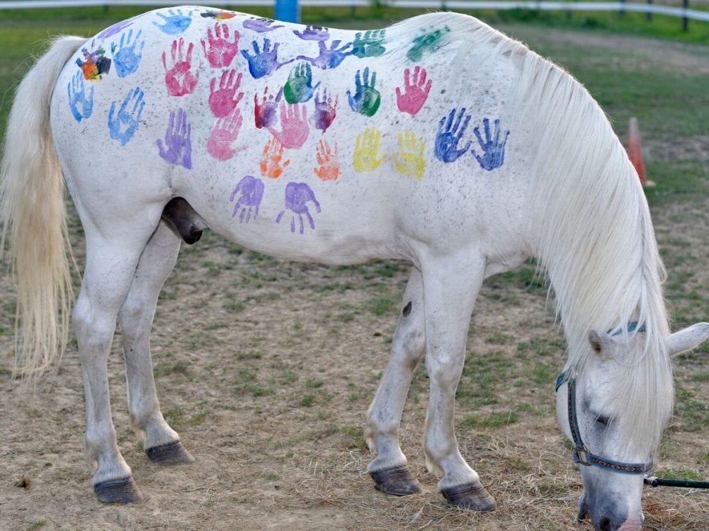 Choosing A Safe Paint To Use To Decorate Your Horse Or Pony Helpful Horse Hints