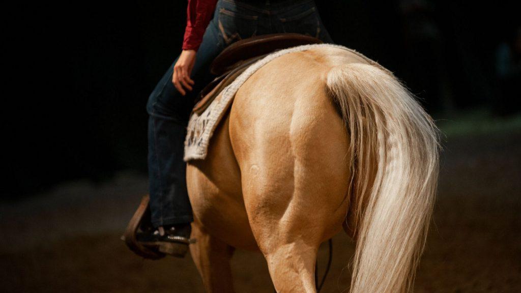 Palomino Horse at Show