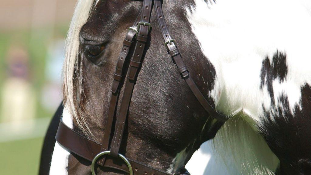 Piebald Paint Horse