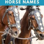powerful horse names