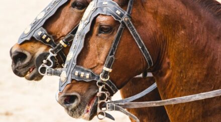120+ Strong and Powerful Horse Names