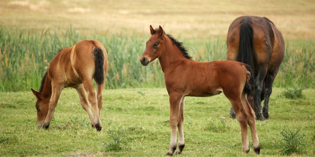 pretty foal standing in a pasture