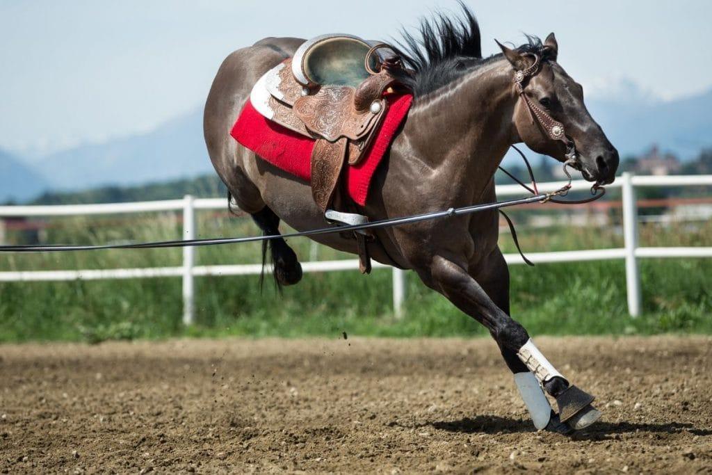 bucking quarter horse