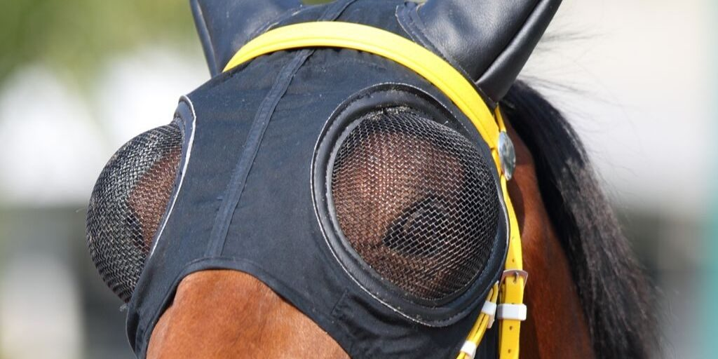 Full mesh goggles on a race horse.