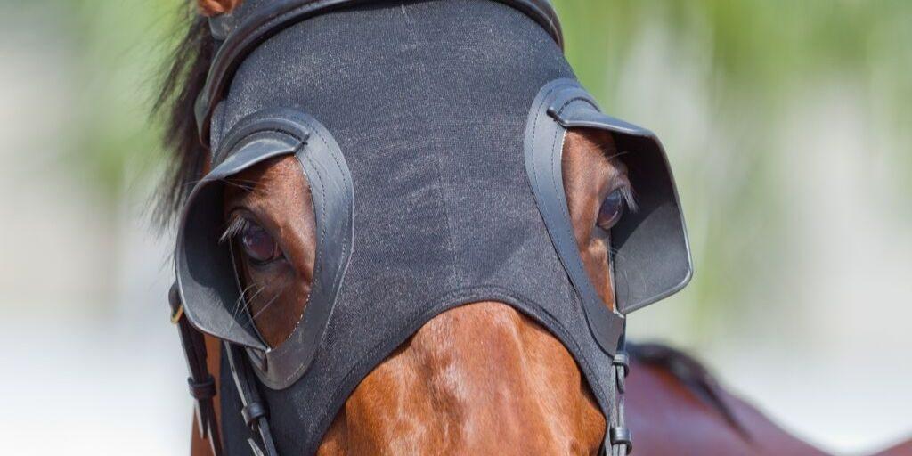 Racing hood on a horse.