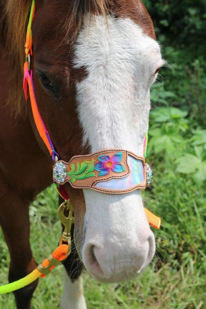 7 Of The Most Awesome Personalized Horse Halters On The Web Helpful Horse Hints