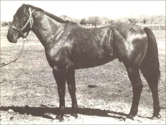 redman quarter horse stallion