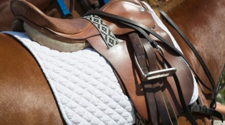 Types of Western Saddle Pads