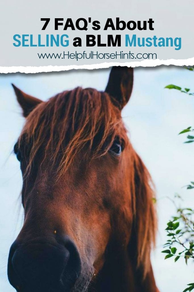 7 Faqs About Selling A Blm Mustang Helpful Horse Hints