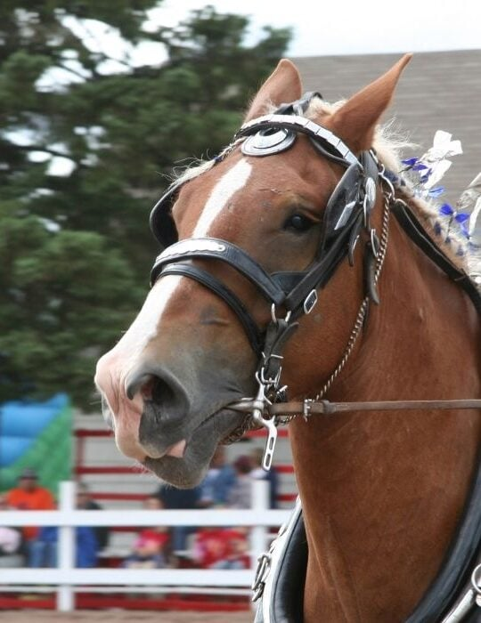 show horse in an event