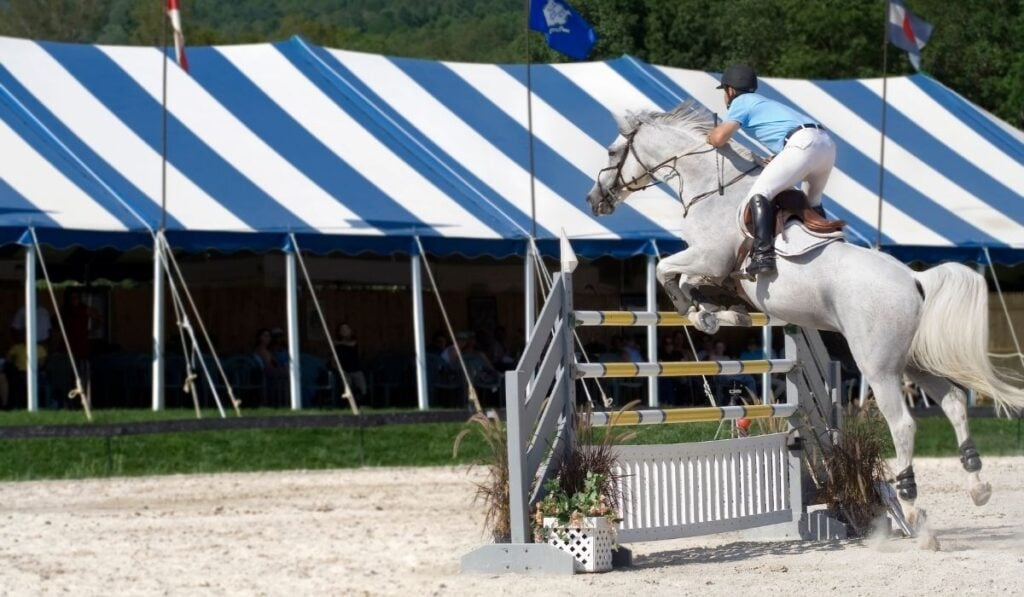 showjumping white horse
