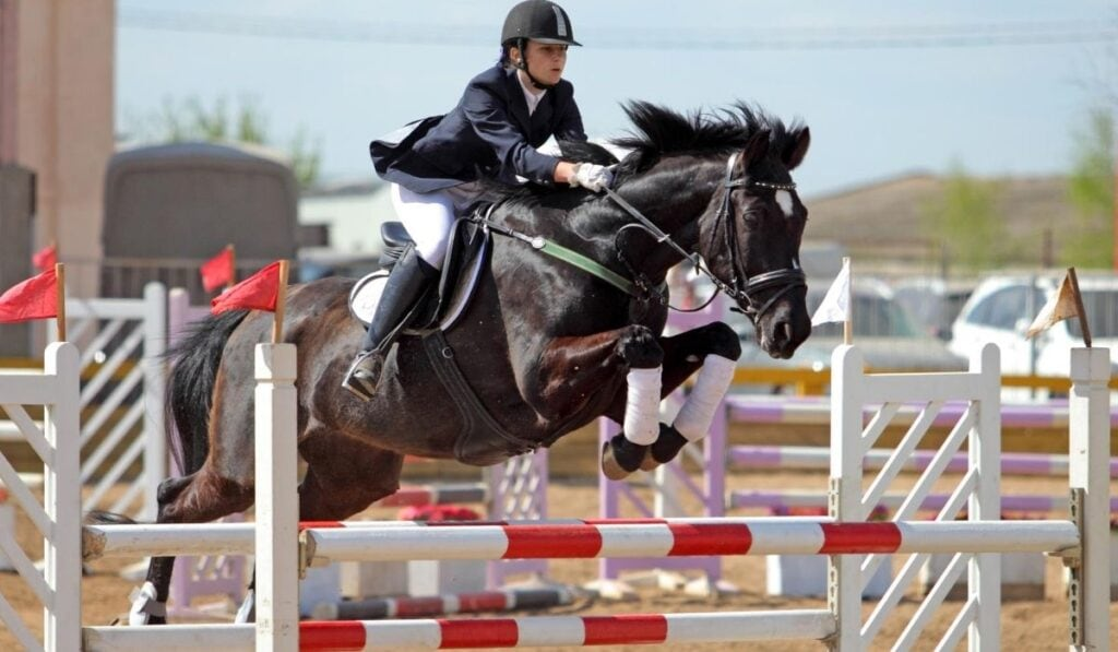 horse jumping a square oxer