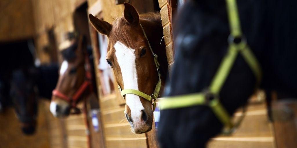 strange horses shouldn't be fed horse treats