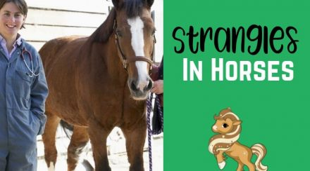 Strangles in Horses – Overview, Complications, Treatment & Aftercare
