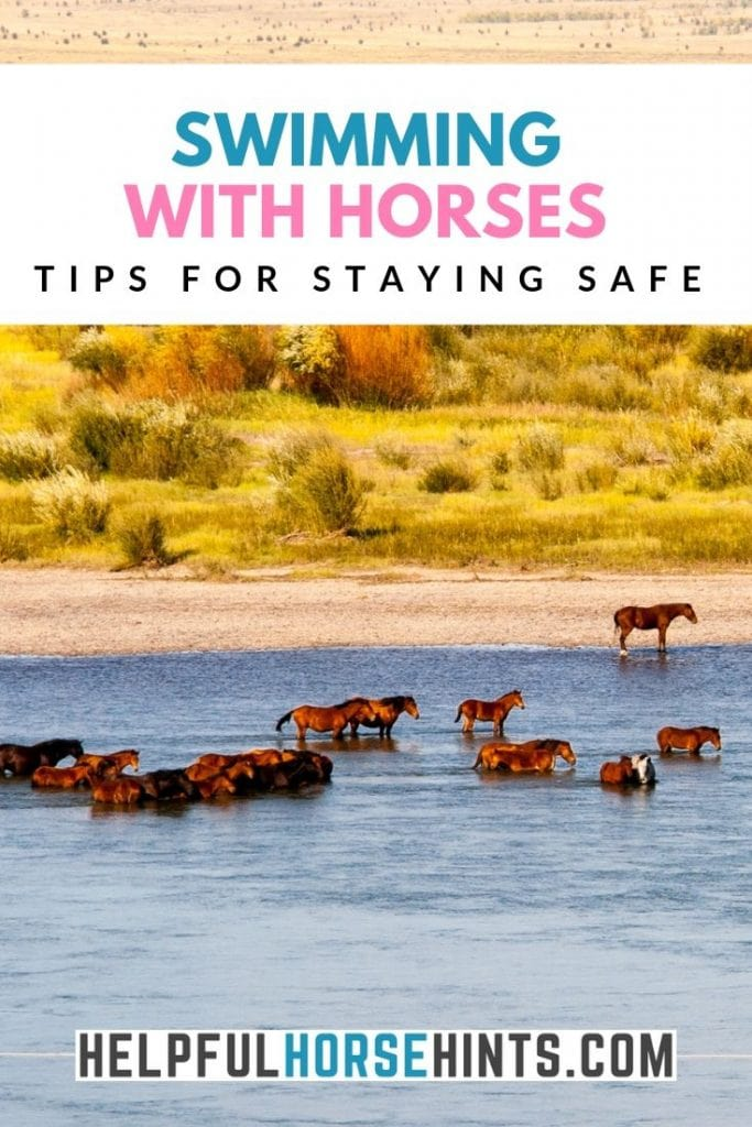 horses swimming and standing in water - pinterest image