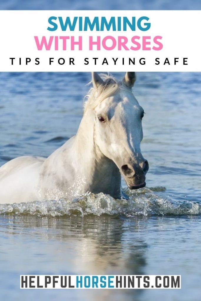white horse swimming - pinterest image