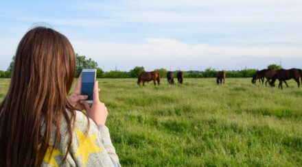 Creative Horse Photography – 7 Steps for Taking Better Pictures