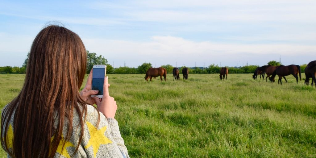 taking horse pictures with a cell phone