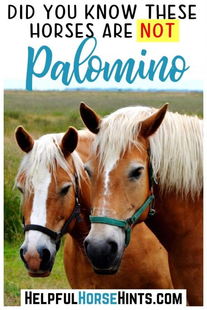 hafflinger horses in pinterest image