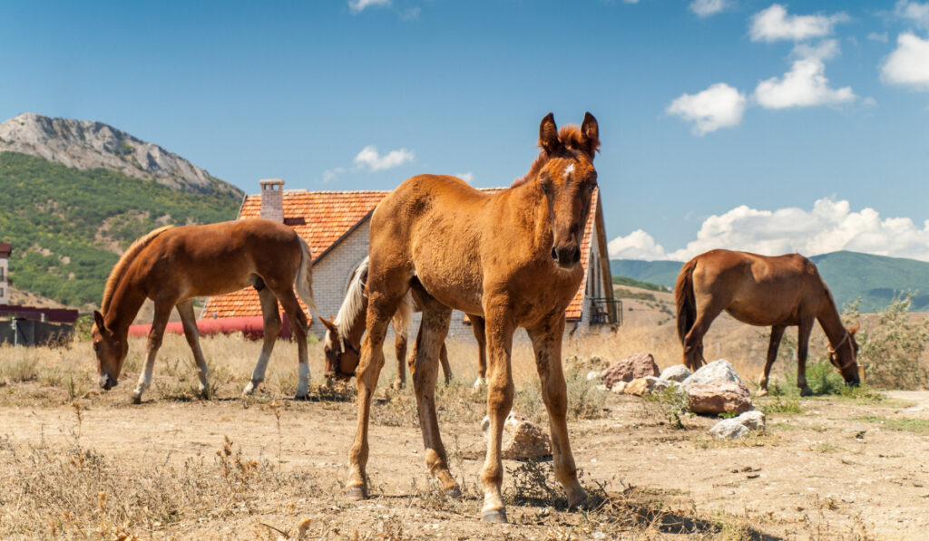 Three horses standing in the backyard in a hot temperature.