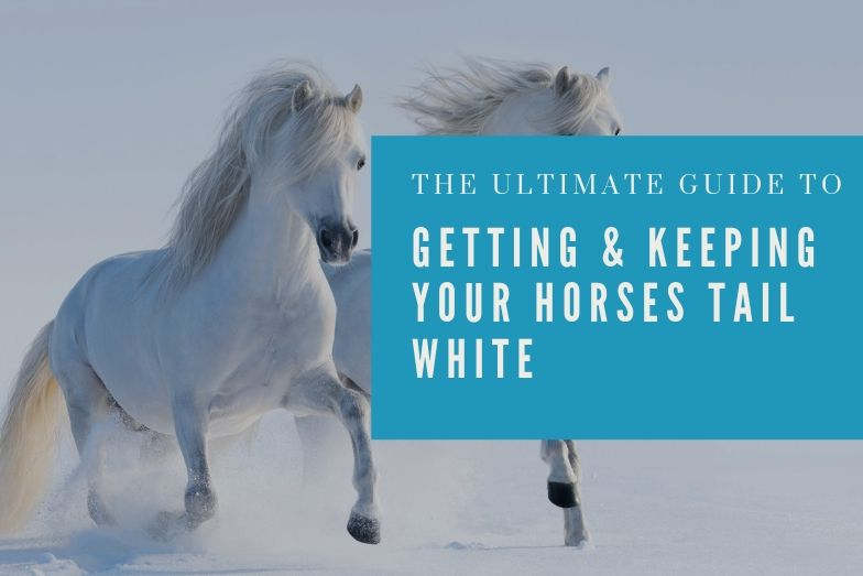 Ultimate Guide to Getting & Keeping Your Horse's Tail White