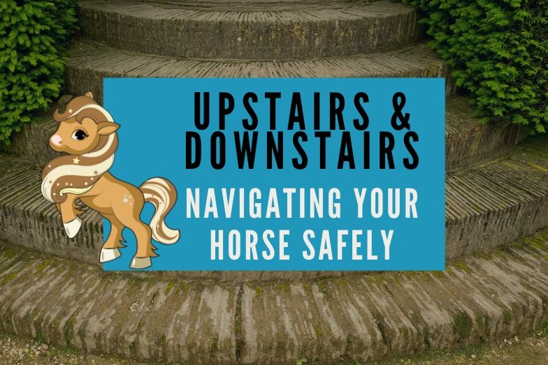 Upstairs & Downstairs: Tips for Navigating Your Horse Safely