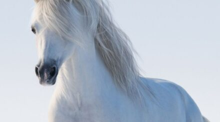 11 Small Horse And Pony Breeds