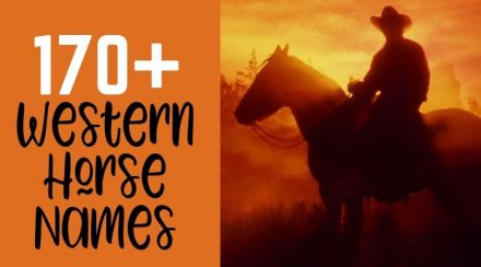 170+ Western Horse Names – for Mares and Geldings (Male and Female)
