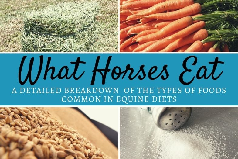 Detailed Breakdown of What Horses Eat