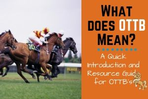 What Does OTTB Mean in the Horse World?