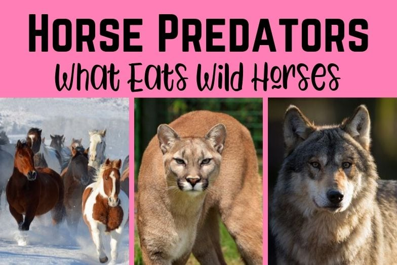 Horse Predators – A Look at What Eats Horses in the Wild
