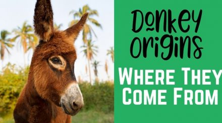 The Origins of Donkeys – A Look at Where They Come From