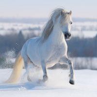 143 White Horse Names - Including Barn Names & Show Names